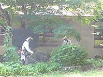 農業大学校富士里付属農場記念碑草刈り