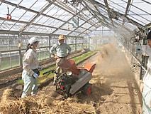 10月1学年農場実習