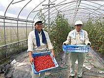 農家体験実習報告3