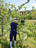 農場実習 ・・・摘花day・・・