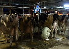 令和元年度畜産(酪農)実習を行いました