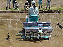 鉄コーティング種子を用いて水稲の直播栽培を行いました