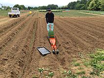 農業経営実習R   ネギ定植