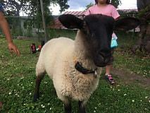 子羊のその後