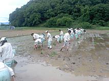 農場実習で田植えを経験しました